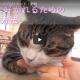 ネコちゃんと仲良くなろう☆-(*´∀`)八(´∀`*)ノイエーイ